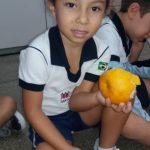Fruta-11-150x150