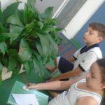 Plantas-5-150x150