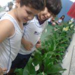 Plantas-7-150x150